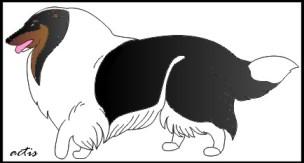collie tricolor white factored